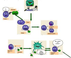 Imunomoduliatoriai